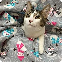 Adopt A Pet :: Peter - Coral Springs, FL