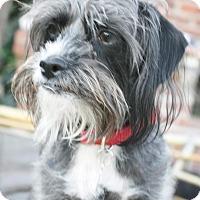 Adopt A Pet :: Tate - Encino, CA