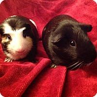 Adopt A Pet :: Iaon and Fred - Williston, FL