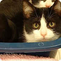 Adopt A Pet :: KISS - Diamond Bar, CA