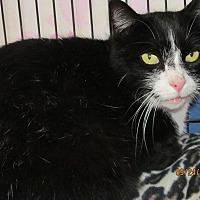 Adopt A Pet :: Buddy - Corinth, NY