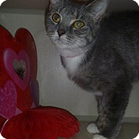 Adopt A Pet :: Claudette - Hamburg, NY