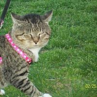 Adopt A Pet :: Burrow - Mexia, TX
