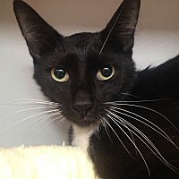 Adopt A Pet :: Javier - Sarasota, FL