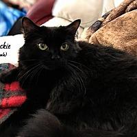 Adopt A Pet :: Blackie - Sarasota, FL