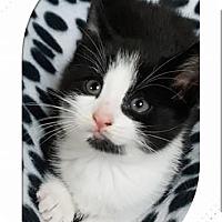 Adopt A Pet :: Texas - Oxford, CT