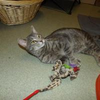 Adopt A Pet :: Richie - BATH, NY