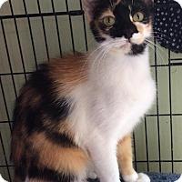 Adopt A Pet :: Lizzie - Breinigsville, PA