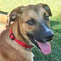 Adopt A Pet :: Sullivan - Gretna, NE