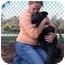 Photo 2 - German Shepherd Dog/Labrador Retriever Mix Dog for adoption in Los Angeles, California - Magic von Churwalden