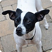 Adopt A Pet :: Bodie - Hagerstown, MD