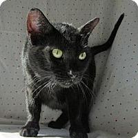 Adopt A Pet :: Dawn - Milwaukee, WI
