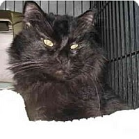Adopt A Pet :: Tony - Mission, BC
