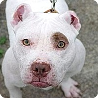 Adopt A Pet :: Blanka - Reisterstown, MD