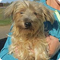 Adopt A Pet :: Arlo - Salem, NH