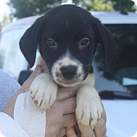 Adopt A Pet :: Reed - PENDING, in Maine - kennebunkport, ME