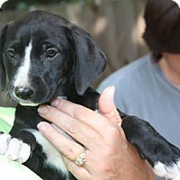 Adopt A Pet :: Rosie - Marion, AR