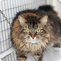 Adopt A Pet :: Bella - Covington, LA
