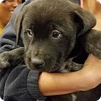 Adopt A Pet :: Salami - Gainesville, FL