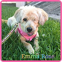 Adopt A Pet :: Emma Rose - Hollywood, FL