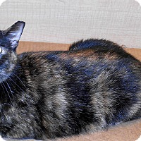 Adopt A Pet :: Eudora - Chattanooga, TN