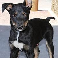 Adopt A Pet :: Walt - Gilbert, AZ