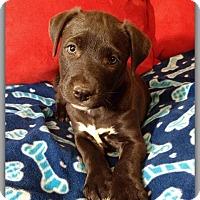 Adopt A Pet :: Sprite - DeForest, WI