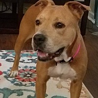 Adopt A Pet :: Stepper - Virginia Beach, VA
