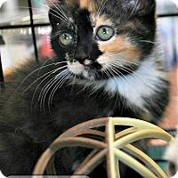 Adopt A Pet :: Cady - Nottingham, MD