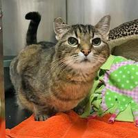 Adopt A Pet :: Frostine - Noblesville, IN