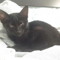 Adopt A Pet :: Charlotte - Warren, MI