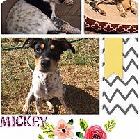 Adopt A Pet :: Mickey - East Hartford, CT