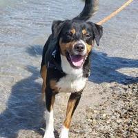 Adopt A Pet :: Mclovin - Ashtabula, OH