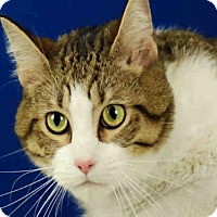 Adopt A Pet :: HOBBS - Fort Collins, CO