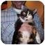 Photo 2 - Domestic Shorthair Cat for adoption in Spokane, Washington - Dora