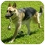 Photo 2 - German Shepherd Dog Dog for adoption in Osseo, Minnesota - Harley