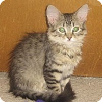 Adopt A Pet :: Kamea - Colorado Springs, CO