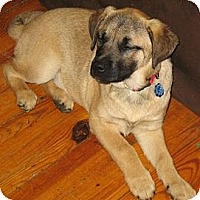 Adopt A Pet :: Trace - in Maine - kennebunkport, ME