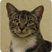 Adopt A Pet :: Jodie - Metairie, LA