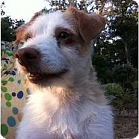 Adopt A Pet :: Scruffy - Ooltewah, TN
