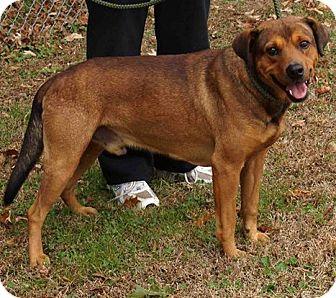 Shepherd (Unknown Type) Mix Dog for adoption in Alpharetta, Georgia - Henry