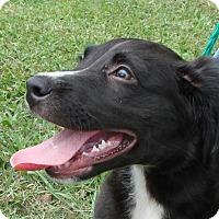 Adopt A Pet :: Mija - Erwin, TN