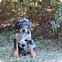 Adopt A Pet :: padriac - South Dennis, MA