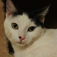 Adopt A Pet :: Nancy - Canoga Park, CA