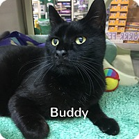 Adopt A Pet :: Buddy - Foothill Ranch, CA