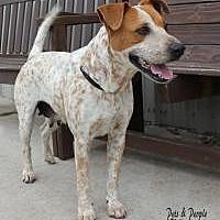 Adopt A Pet :: Lucky Star - Yukon, OK