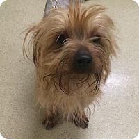 Adopt A Pet :: Lilo - Oak Ridge, NJ