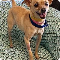 Adopt A Pet :: PB - Phoenix, AZ