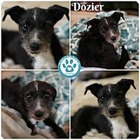 Adopt A Pet :: Dozier - Kimberton, PA