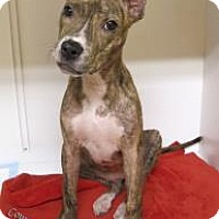 Adopt A Pet :: Daphne - Las Cruces, NM